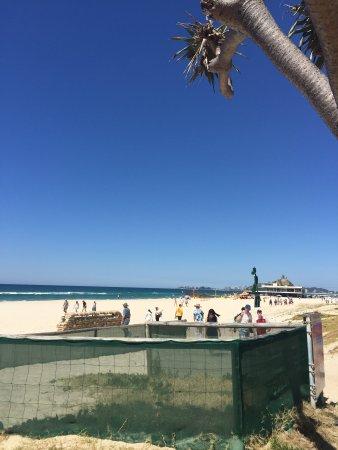 currumbin sands on the beach reviews