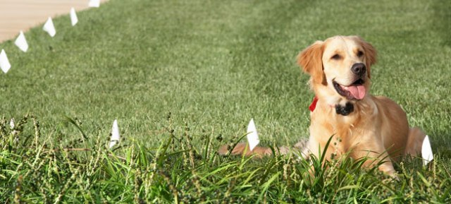 pet safe invisible fence reviews